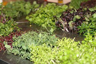 Green Chefs - Lebensmittel