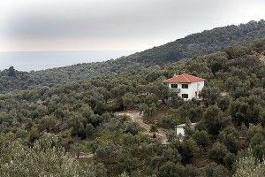 Jordan Olivenöl - Lesbos