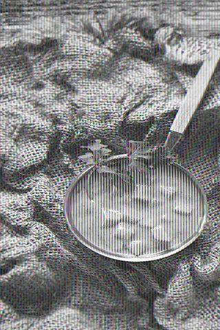 Die Zen-Gebote des Kochens - Currybasis