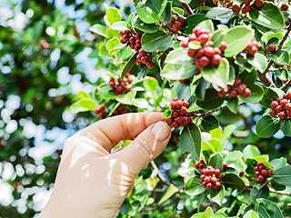 pexels-photo - Das Wissen der Baristas - Kaffeekirsche