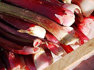 Zu gut für die Tonne - Saisonales restlos genießen - Rhabarber