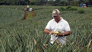 Südfrüchte - Öko-Anbau
