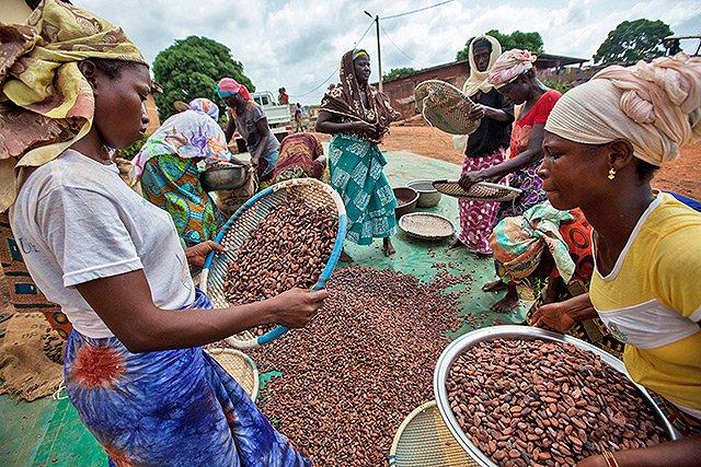 Fairtrade erhöht Mindestpreis für Kakao um 20 Prozent