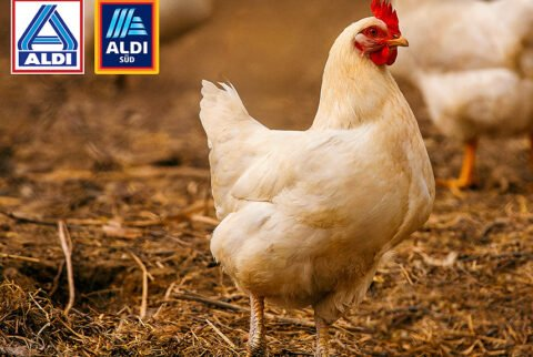 ALDI - Tierwohl - Masthuhn-Initiative